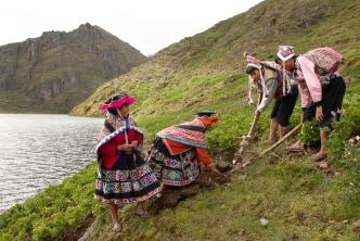 Francisca Bayona Pacco, 37,ist Papa Arariwa in der Bauerngemeinde Paru Paru in Pisac, Cusco, Peru. Gemeinsam mit Ricardo und Faustino Pacco, zwei gewaehlten Autoritaeten de Kartoffelparkes, pfluegt sie die Erde. Dabei darf nur die Frau die geoeffnete Erde anfassen, die Maenner bedienen den traditionellen Grabstock, der heute noch in den steilen, felsigen und engen Berghaengen ueblich ist.